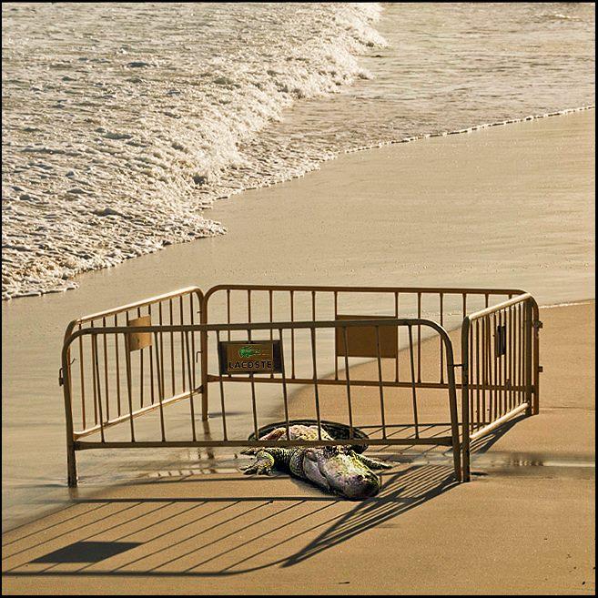 Resultado de imagen de crocodile beach